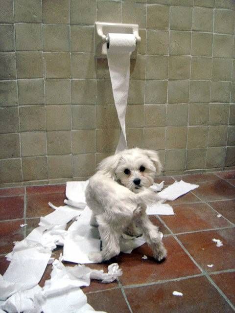 Not Abby - just a stock photo of a dog online.  I WISH this were the extent of her mess!